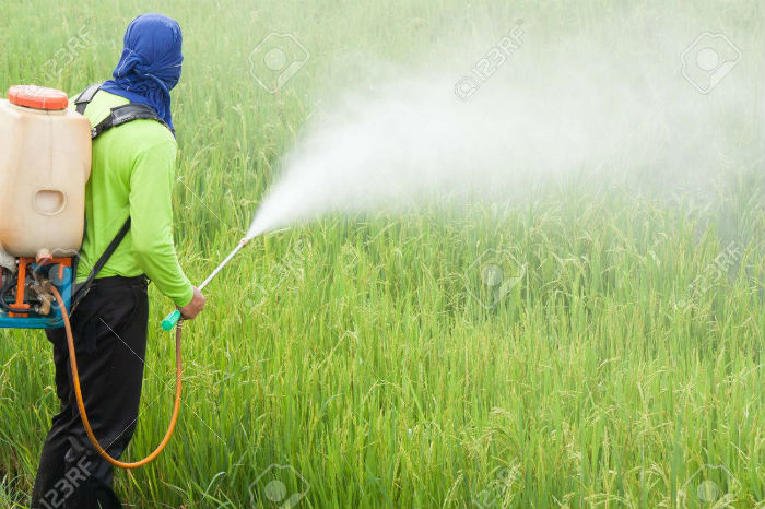 31725052-agriculteur-pulvérisation-de-pesticides-dans-les-champs-de-riz