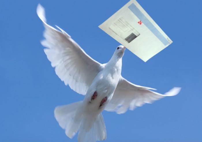 oiseau porteur lettre