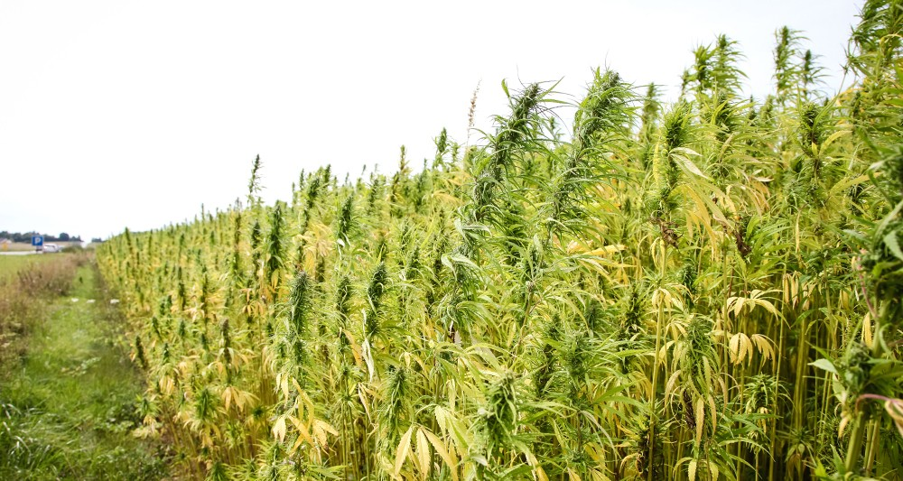 2182600_le-cannabis-lavenir-de-la-creuse-web-tete-0301782934399