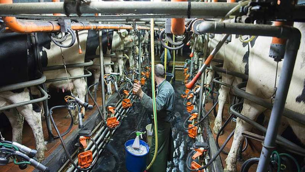 bea043fad9ba9b14367d58929eca2436-lait-neuf-op-et-aop-se-federent-pour-peser-dans-la-loi-alimentation